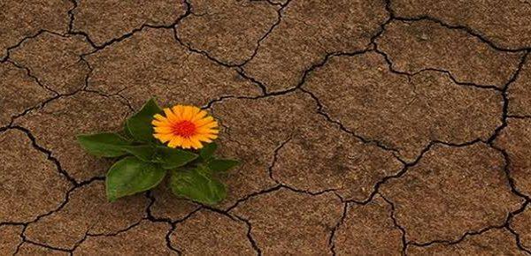 Bu Toprak Bizi Nereye Götürür⁉️