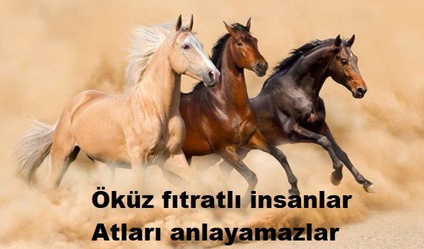 Öküz Fıtratlı İnsanlar Atları Anlayamazlar…